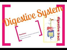 Zoom in, zoom out and learn all about the Digestive System: Digestive Tract, Mechanical and Chemical digestion, Enzymes, Peristalsis, Villi, Microvilli.