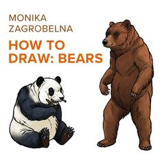 Monika Zagrobelna shows us How to Draw Bears! A group of terrifying beasts; big fluffy and  clumsy bears are fascinating creatures with unique silhouettes.They're also surprisingly simple to draw! Monika gives us tutorials for five breeds from nose to paw. Check it Out: SketchBook.com/Blog