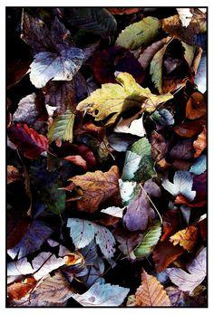 autumn candyyy