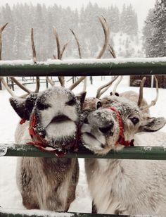 Christmas Feeling, Cozy Christmas, Vintage Christmas, Christmas Time, Animals And Pets, Cute Animals, Pretty Animals, Wallpaper Aesthetic, Christmas Animals