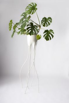 We dig these frighteningly well-designed plant pots from Tim van de Weerd... http://www.we-heart.com/2014/12/16/tim-van-de-weerd-monstera/