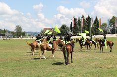 Présentation de la race F.M. Horses, Animals, Mountains, Pageants, Horse, Animales, Animaux, Animal Memes, Animal