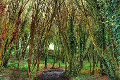 """""""Major rain storms all night and all morning and my mind is wandering back to summer walks and travels.one of many breathtaking walks at Gorgeous place. West Cork, Georgian Homes, Simple Living, Pathways, Walks, Acre, Woodland, Nature Photography, Beautiful Places"""