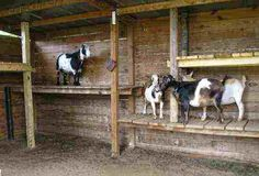 pygmy goat house plans