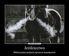 Equestrian Quotes, Horse Riding, Lol, Horses, Pets, Animals, Wallpaper, Quote, Animales