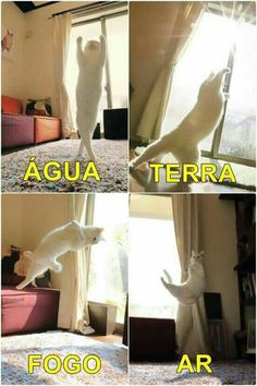 Esses 4 elementos formam o avatar! Funny Animal Memes, Stupid Funny Memes, Cat Memes, Haha Funny, Funny Cats, Funny Animals, Cute Animals, Funny Images, Funny Pictures
