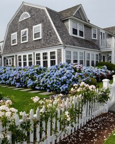 Martha's Vineyard Guide: My Favorite Places shingled nantucket home with blue hydrangea hedge Coastal Cottage, Coastal Homes, Coastal Style, Nantucket Home, Nantucket Style Homes, Nantucket Massachusetts, Nantucket Island, Blue Hydrangea, White Hydrangeas
