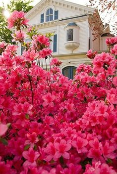 Beautiful pink !!! ~~~Lela's !