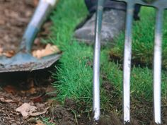 Common Lawn Problems and How to Fix Them --> http://www.hgtvgardens.com/lawn-care/dealing-with-lawn-problems?soc=pinterest