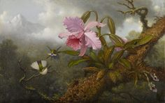 "Martin Johnson Heade ""Cattleya Orchid, Two Hummingbirds and a Beetle"" ca. 1875-90"