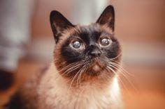 #cats #pets