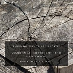 How Do Termites Cause So Much Damage - Terminator Termite & Pest Control Termite Pest Control, Founded In, Earth, Sugar, Wood, Woodwind Instrument, Trees, Home Decor Trees, Woods
