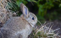 rabbit background desktop free, Wendy Blare 2017-03-20