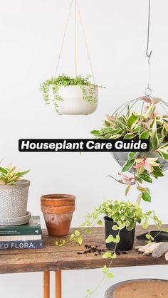 Cool Plants, Live Plants, Indoor Garden, Indoor Plants, Herb Garden, Growing Flowers, Planting Flowers, Philodendron Monstera, Inside Garden