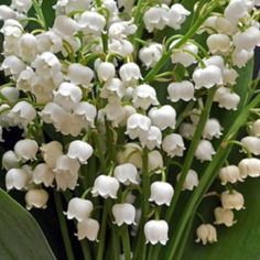 LOVE the smell of Lily of the Valley! (takes me back to my childhood days....)
