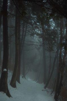 forest, dark forest