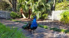 Rip Van Winkle Gardens - New Iberia, Louisiana