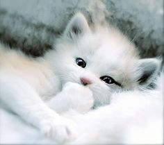 Cute Baby Kittens | #Kitties
