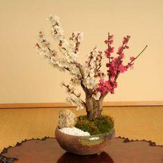 white & pink grated, cherry blossom bonsai tree