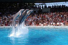 Zoomarine entre os melhores parques de diversões da Europa - http://local.pt/zoomarine-entre-os-melhores-parques-de-diversoes-da-europa/
