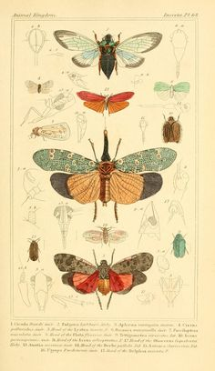 n190_w1150 | The animal kingdom, arranged according to its o… | Flickr Art And Illustration, Gravure Illustration, Vintage Illustrations, Botanical Drawings, Botanical Prints, Scientific Drawing, Motifs Animal, Insect Art, Nature Prints