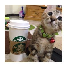 icell with her latte