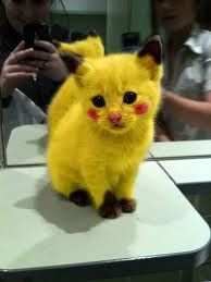 PIKACHU CAT *UPDATE!!! to be CLEAR, the kitty has been 'photoshopped'! this means the photo has been manipulated for your amusement, using computer software. (Please note, amusement is subject to discretion and may differ between viewers.) I'm sure after this snap was taken the kitty went on to lead a happy life as a beloved pet... and probably never suffered such fate as to be made into McNuggets, or a pair of running shoes. Animal cruelty is diverse in its forms - and this isn't one of…