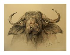 buffalo head by Natamur on DeviantArt