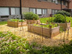 Raised Flower Beds - Grow Vegetables  / Plants to sell at Country Market Fair