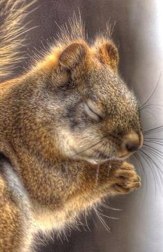 Bless everyone who loves squirrels and please let Denver win tomorrow...(**Feelin' Squirrely** group board)