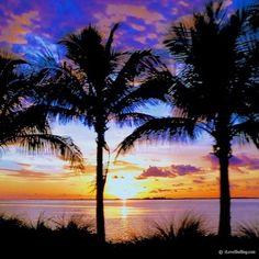 sanibel palm tree sunset