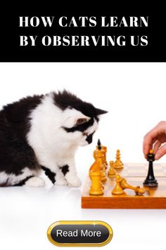 Our cats watch us closely, and often modify their behavior to match our human behavior. Learn more about what and how cats learn from us