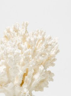 Corail décoratif via Goodmoods