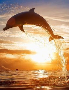Dolphin - Google+
