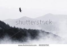 bird flying over misty hills, monochrome nature landscape