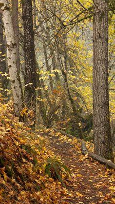 Beautiful pathway source Flickr.com