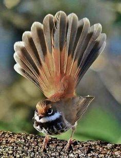 Beautiful birds, ,abstract birds, birds, bird k… – Animal Planet Most Beautiful Birds, Pretty Birds, Love Birds, Small Birds, Little Birds, Colorful Birds, Exotic Birds, Exotic Pets, Beautiful Creatures