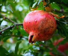 Free Image on Pixabay - Pomegranate, Fruit, Healthy, Food Pomegranate Fruit, Fruit Picture, Mango Fruit, Aloo Gobi, Fruits Images, Healthy Fruits, Healthy Food, Fruit Art, How To Increase Energy