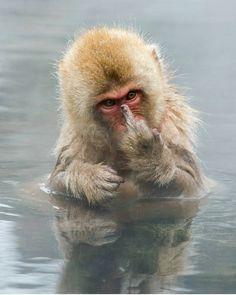"Wildlife   Nature (@wildlifeaddicts_) on Instagram: ""Japanese Macaque   Photography By ©Jari Peltomaki #wildlifeplanet"""