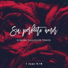 La persona que ama no tiene miedo. Donde hay amor no hay temor. Al contrario el verdadero amor quita el miedo. Si alguien tiene miedo de que Dios lo castigue es porque no ha aprendido a amar. 1 Juan 4:18 @youversion @ibvcp #buenosdias #islademargarita #venezuela