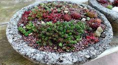 All Dried Up? or Plump & Perky? – Succulent Care 101 via @hypertufagarden