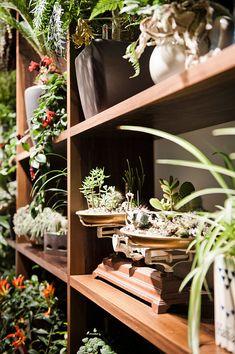 shelf of plants