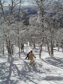 Safe Glade Skiing!