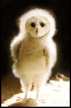 """White (baby?) owl with puffy feathers out in the night struck by light from, I guess perhaps the camera.  It has a very innocent look, yet portrays what one can only call a mischievous aura.  Like it's about to go """"BOO!"""" and scare the hell out of someone."""