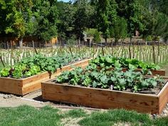 (Foods For Long Life): Start Your Fall And Winter Vegetable Garden - How To Build A Raised Bed Vegetable Garden Box