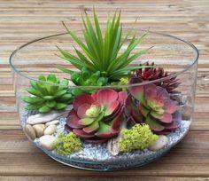 plantes grasses d'intérieur, belles plates grasses dans un terrarium