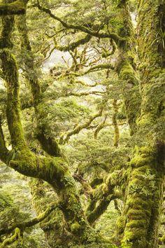 Parque Nacional Mount Aspiring, Nova Zelândia | 15 lugares de tirar o fôlego que você não vai acreditar que são reais