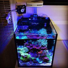 Saltwater Aquarium Setup, Coral Reef Aquarium, Saltwater Fish Tanks, Nano Aquarium, Aquarium Design, Marine Aquarium, Aquarium Fish Tank, Nano Reef Tank, Reef Tanks