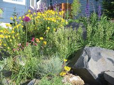 GoodBye Lawn - Hello Veggies, Eco-yards and Pollinators — Snohomish Conservation District