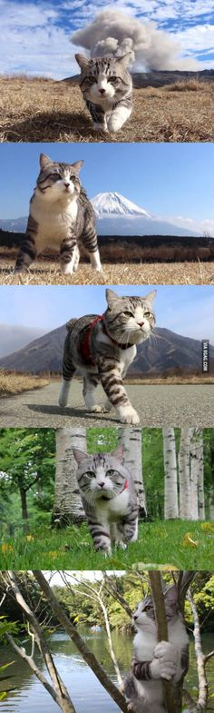 kitten-pictures:  It's The Journey That Counts